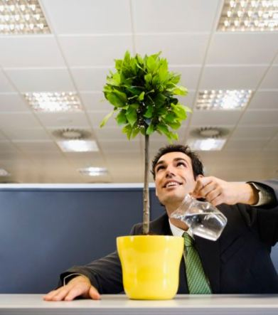 Businessman Watering Plant in an Office Cubicle