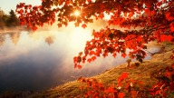 Red-autumn-morning.jpg